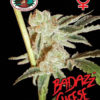 Badazz Cheese Feminised Seeds