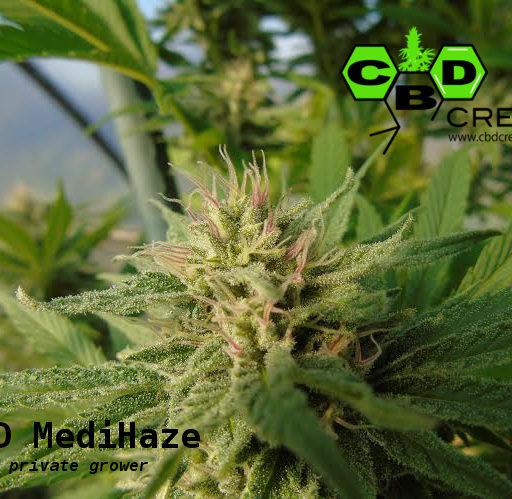 cbd-medi-haze-2