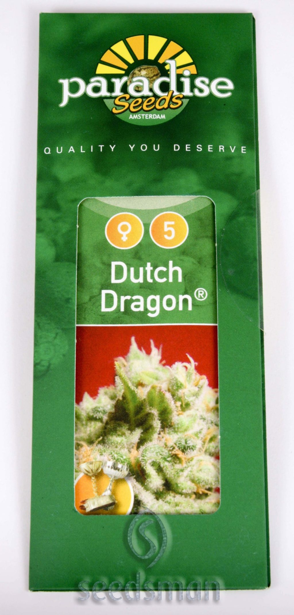 Dutch Dragon Feminizovaná