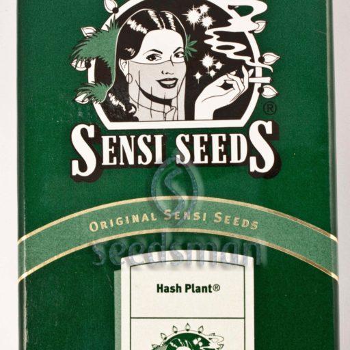 Hash Plant Regulérní