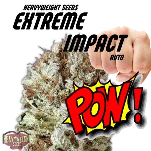 Extreme Impact Auto Feminizovaná