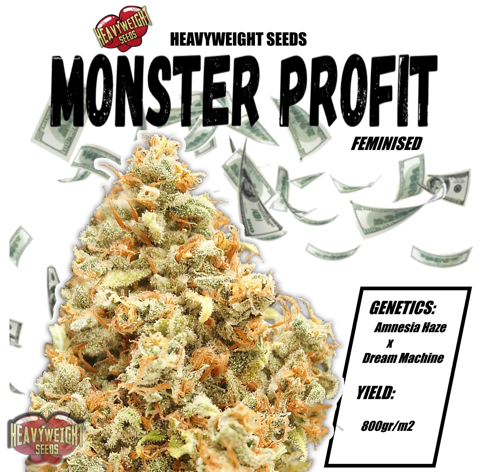 Monster Profit Feminizovaná