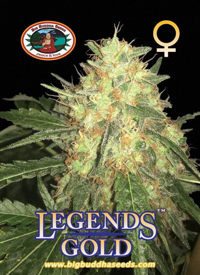 Legends Gold Feminizovaná