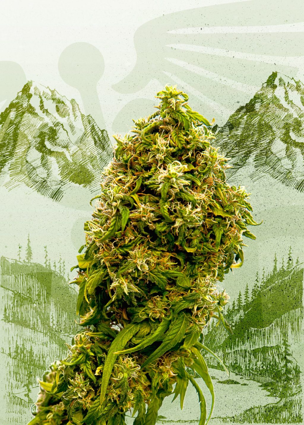 Swiss Dream CBD Feminizovaná