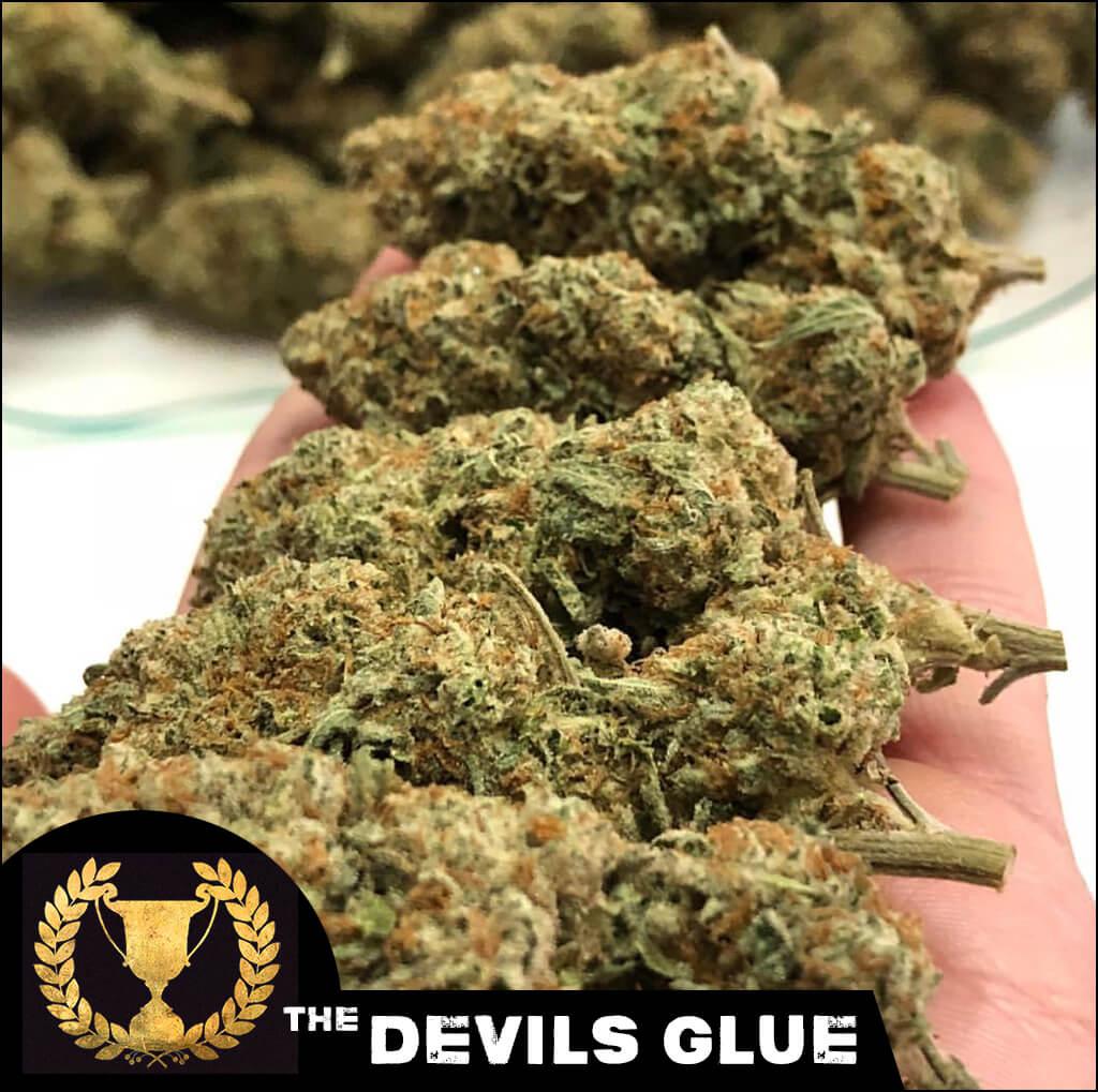 devils-glue-2_dh-dgl-fem