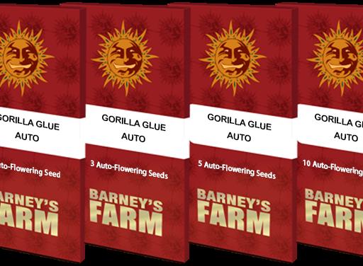gorilla-glue-auto_packet_1_seed