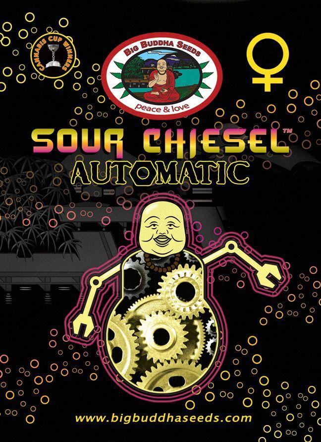 sour-chiesel-auto-2