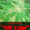 The Claw Regulérní