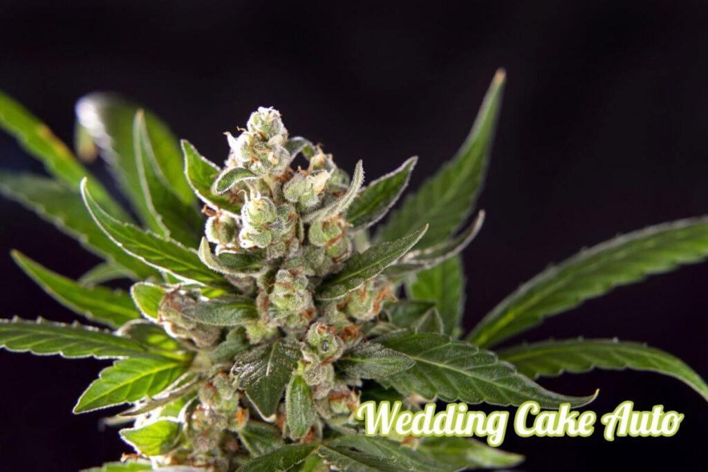 wedding-cake-auto-2_1