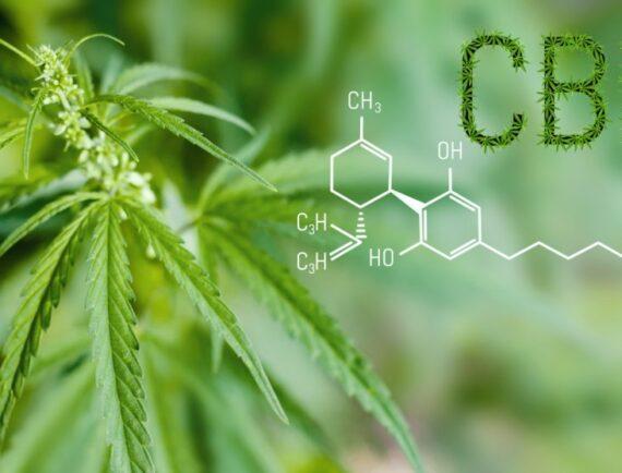 Problém pro konopný byznys: je CBD droga?