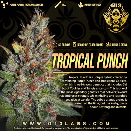 tropical-punch-2