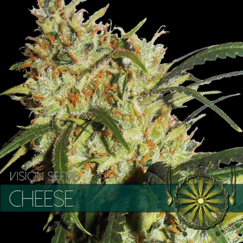 vision-seeds-cheese-500×500-1